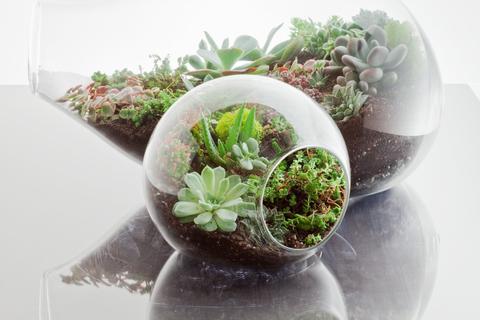 Los terrarium de Botany Factory