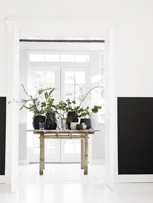 Plantas dentro de tu hogar