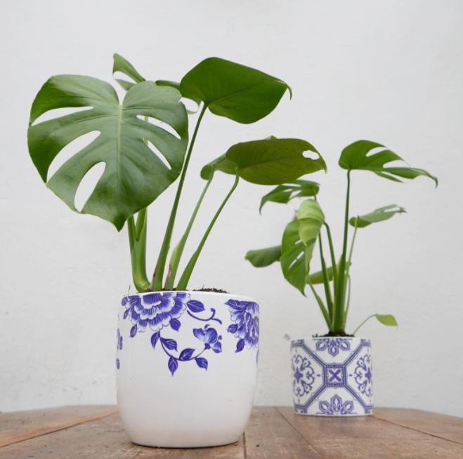 Los viveros boutique que tienes que conocer depto51 blog for Vivero plantas tropicales