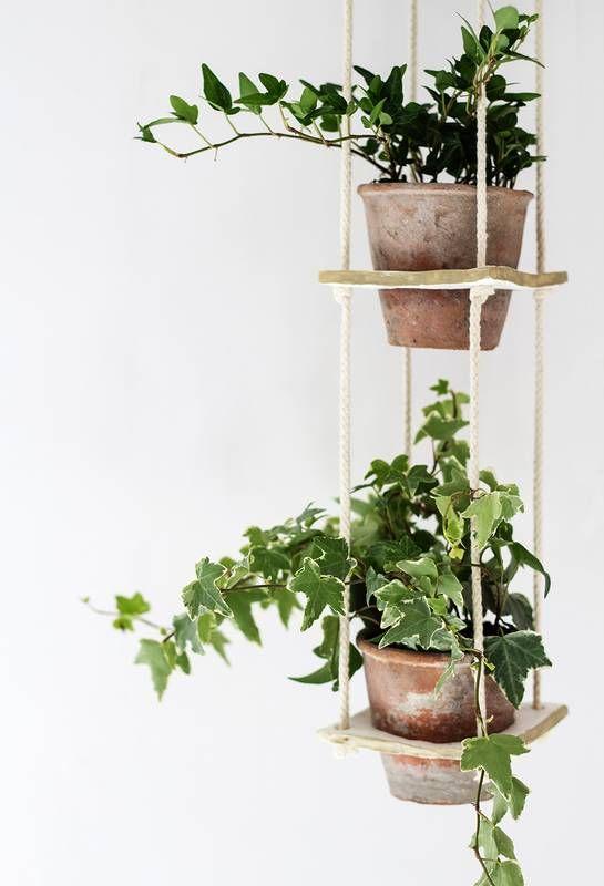 3 plantas colgantes de interior y d nde encontrarlas - Plantas colgantes interior ...