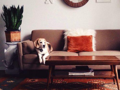 Consejos para mantener tu casa limpia con mascotas