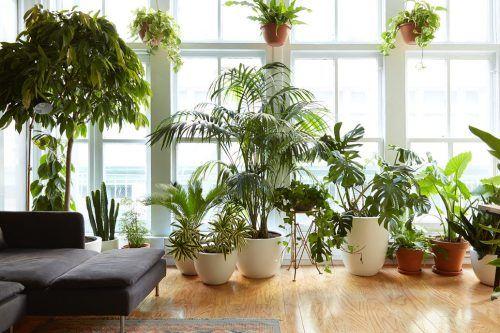 Todo lo que siempre quisiste saber sobre cuidado de plantas de interior