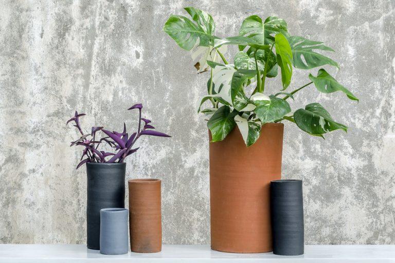 8 Marcas de maceteros para tener muy felices a tus plantitas