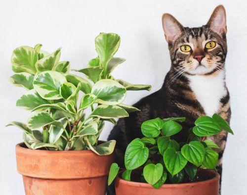 Estas plantas son tóxicas para tus mascotas