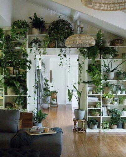 Las mejores plantas para lugares oscuros